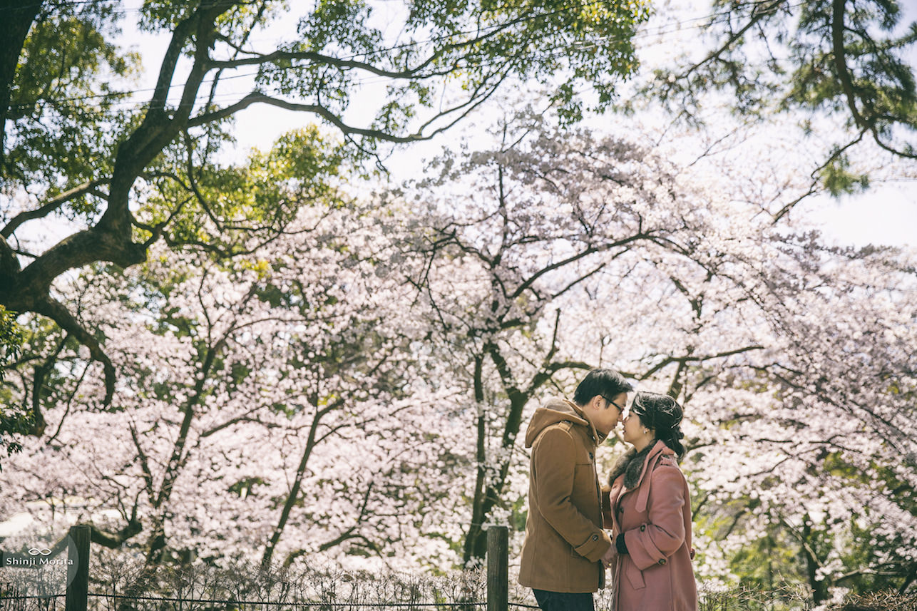 A couple romantically looking at each other surrounded by cherry blossom in Hakone