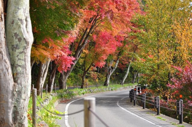 A feeling of fall with red colored maple tree in Yamanashi