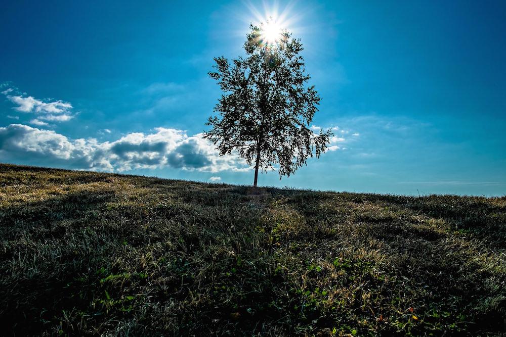A tree with sunlight beaming in Biei, Hokkaido