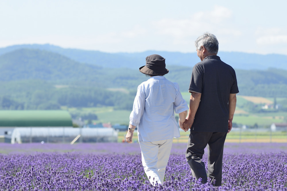 A couple walking hand in hand walking through the lavender garden in Hokkaido for vacation photo