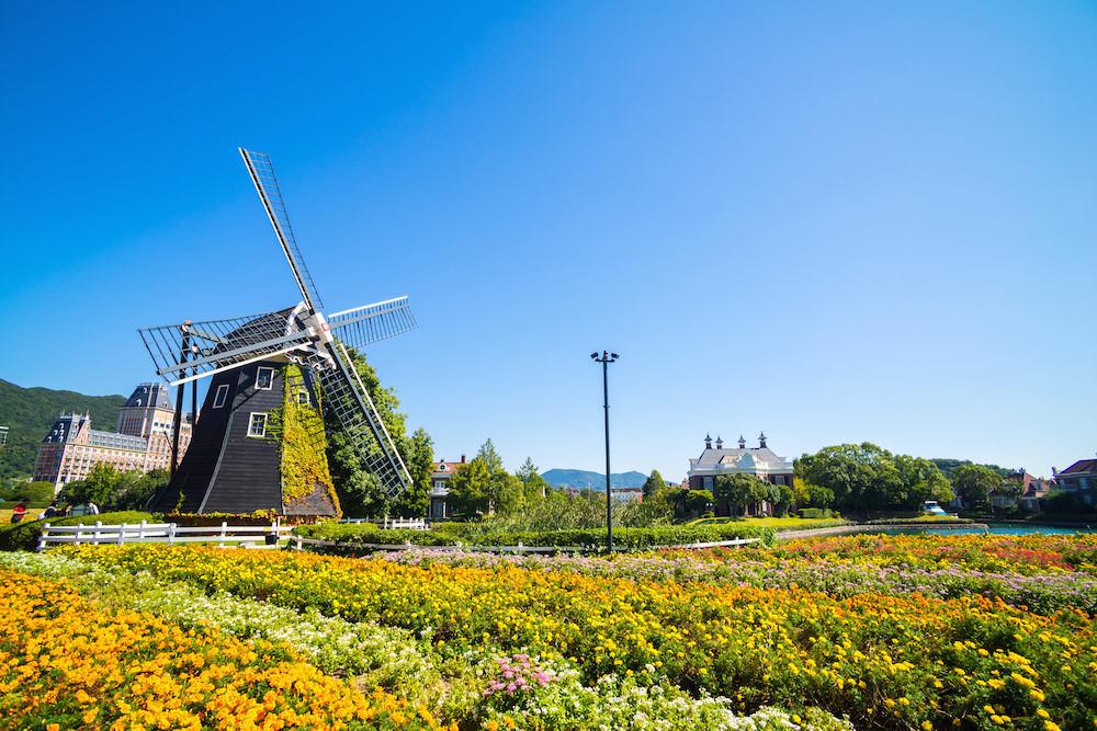 Flowers blooming in Nagasaki in summer