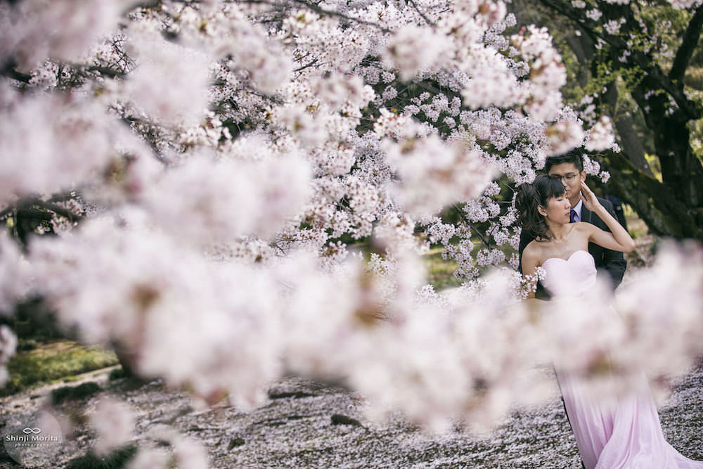 Pre-wedding photo during cherry blossom season in Shinjuku gyoen