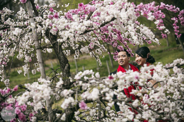 A couple posing by the cherry bloom in Showa Memorial park for their pre-wedding photo