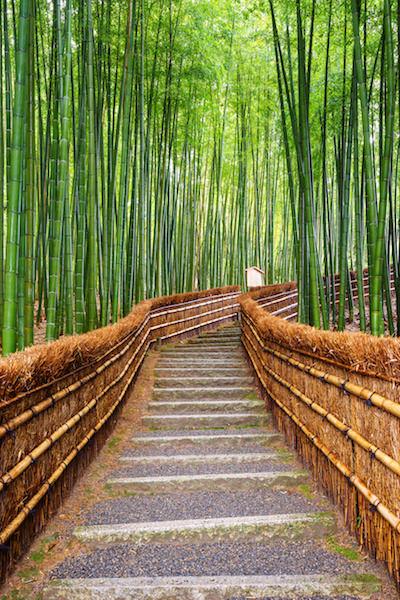 Beautiful bamboo grove in Arashiyama, Kyoto