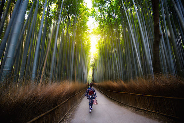 Vacation photo of a solo traveler woman wearing kimono strolling in bamboo grove in Arashiyama, Kyoto