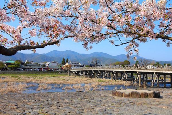 Cherry blossom blooming in Togetsukyo bridge in Arashimaya, Kyoto