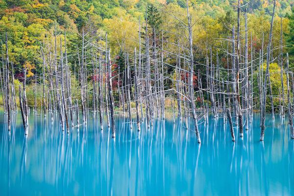Blue pond in Biei, Hokkaido in Autumn
