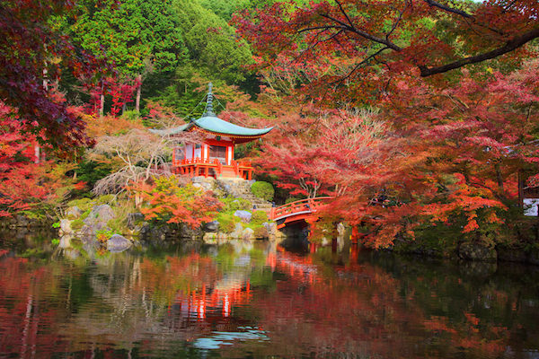 Gaidoji temple in Kyoto in Autumn with colorful red maple trees