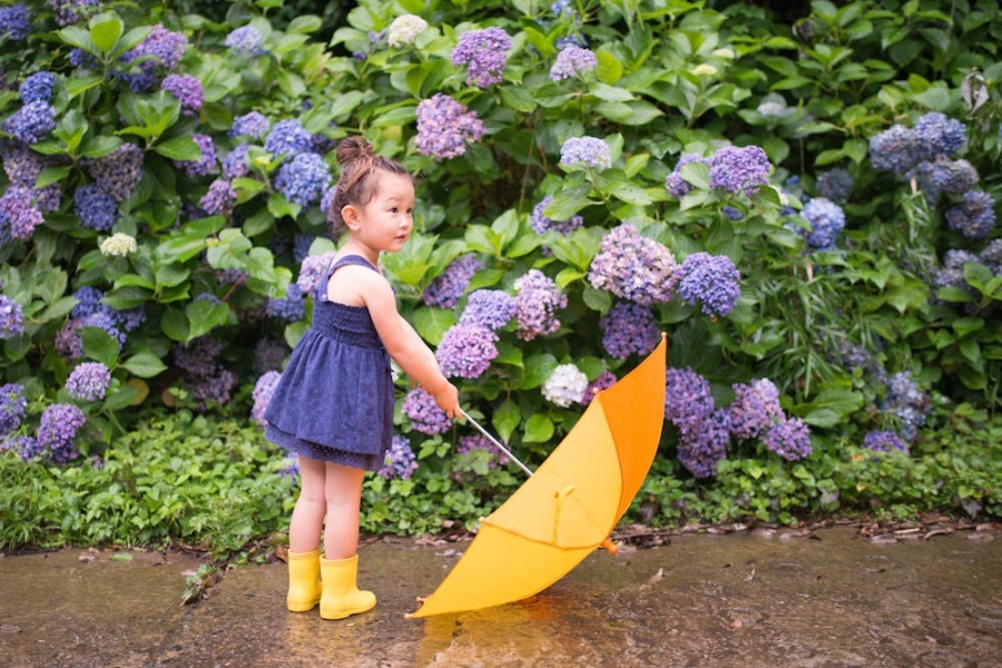 Family vacation photo of a girl holding a yellow umbrella in front of hydrangea on a rainy day for vacation photo