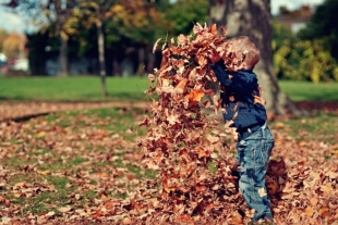 A boy playing with colored leaves in the park in Autumn
