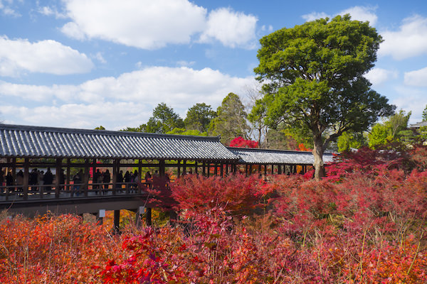 Tofukuji temple in Autumn with red maple trees surrounding the temple