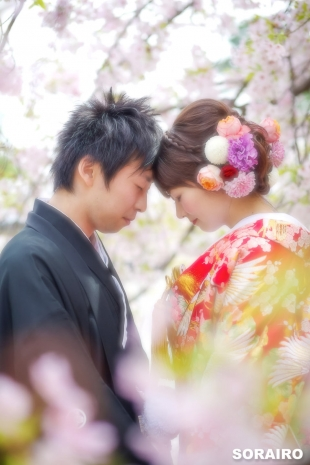 A couple in love wearing kimono for pre-wedding photo in front of cherry blossoms