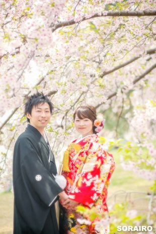 A couple smiling in front of the camera with cherry blossoms in the background while wearing kimono for pre-wedding photo