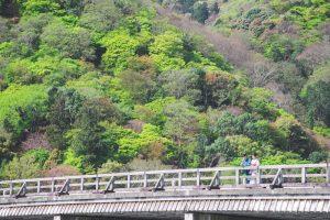 A couple posing at Togetsukyo bridge in Arashiyama, Kyoto wearing kimono