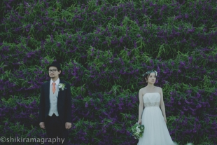 A couple posing in front of a beautiful purple flower garden with woman wearing a wedding dress for pre-wedding photo