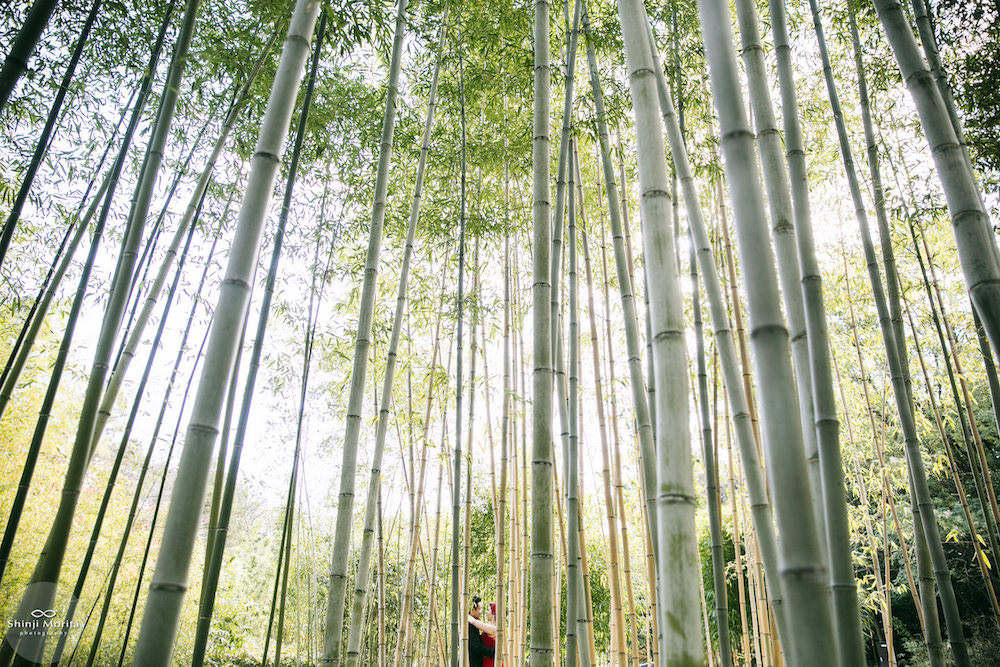 A couple looking at each other for their pre-wedding photo in the bamboo garden in Kyoto botanical garden