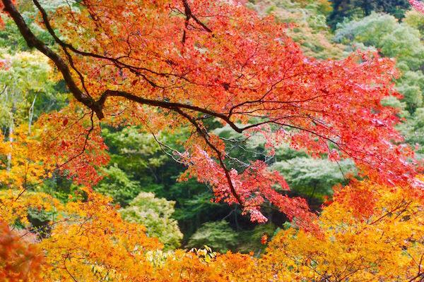 Botanic garden in Kyoto in Autumn