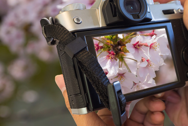A camera capturing cherry blossom in Sprin