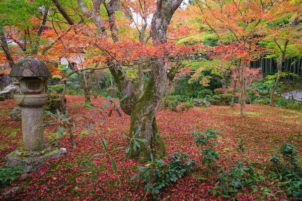 Garden inside Enkoji temple during Autumn