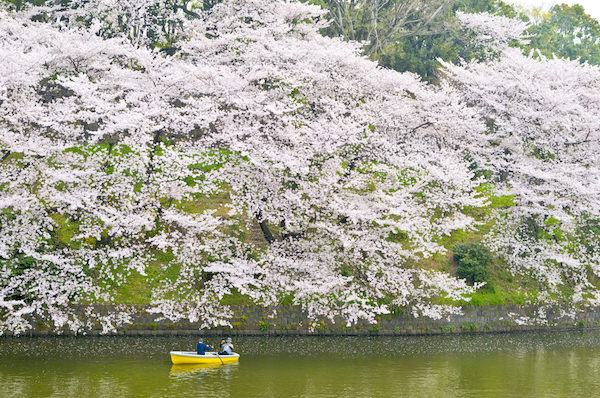 People enjoying a boat ride in Imperial palace during cherry blossom season