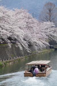 sakura yakatabune