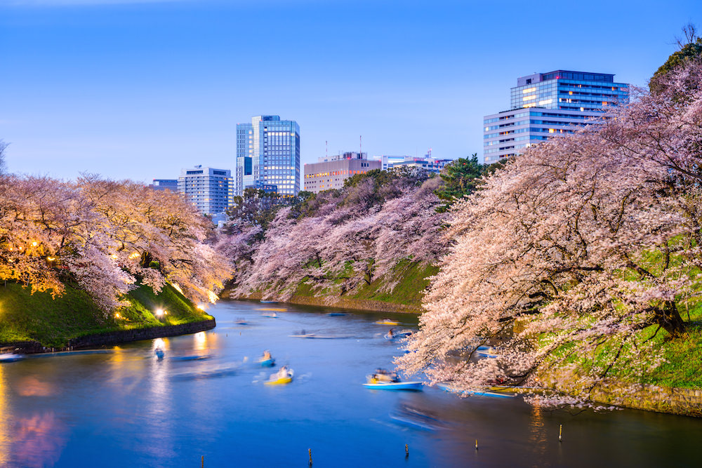 Cherry Blossom around Ueno park in Tokyo near imperial palace