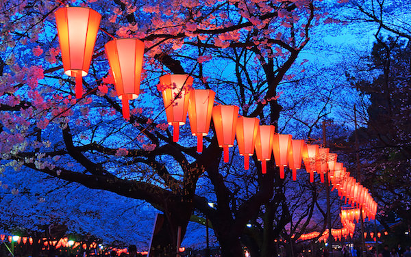 Lantern along Ueno park during night light up for cherry blossom