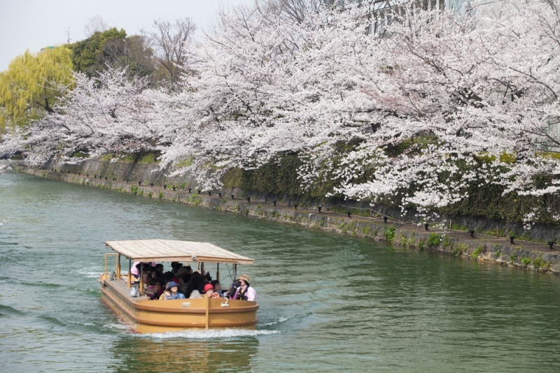 Yakatabune boat during cherry blossom season