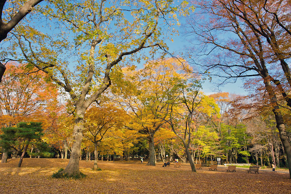 Yoyogi park in Autumn