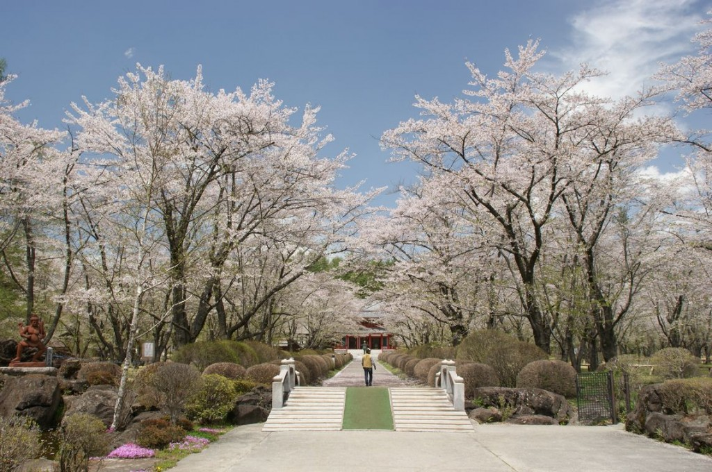 Latest blooming cherry blossom in Honshu
