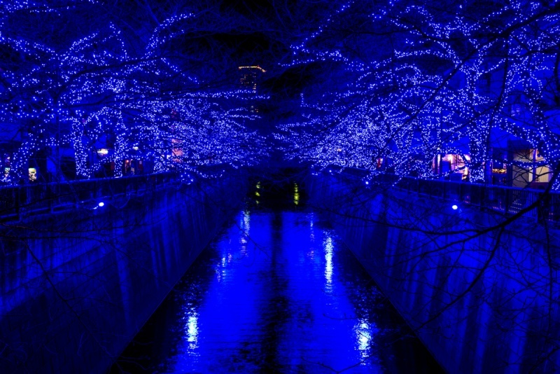 Night yozakura light up in Meguro river