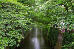 meguro river normal