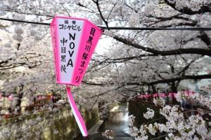 meguro river sakura festival