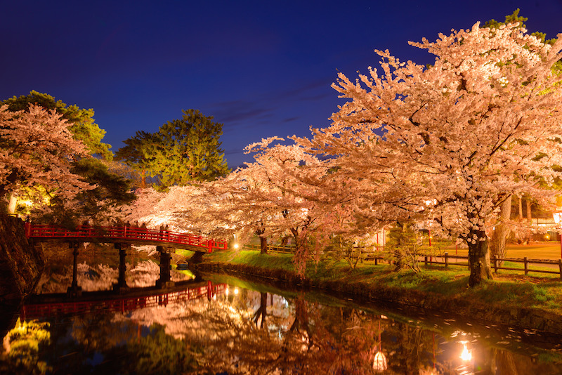 Cherry blossom during night light up in Aomori
