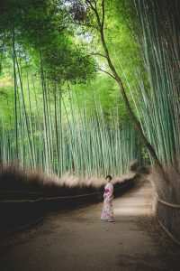Vacation photo surrounded by fresh green bamboo grove in Arashiyama, Kyoto