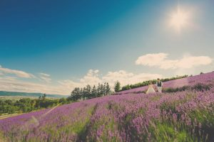 Pre-wedding photo by CHiKA of a couple surrounded by lavender field