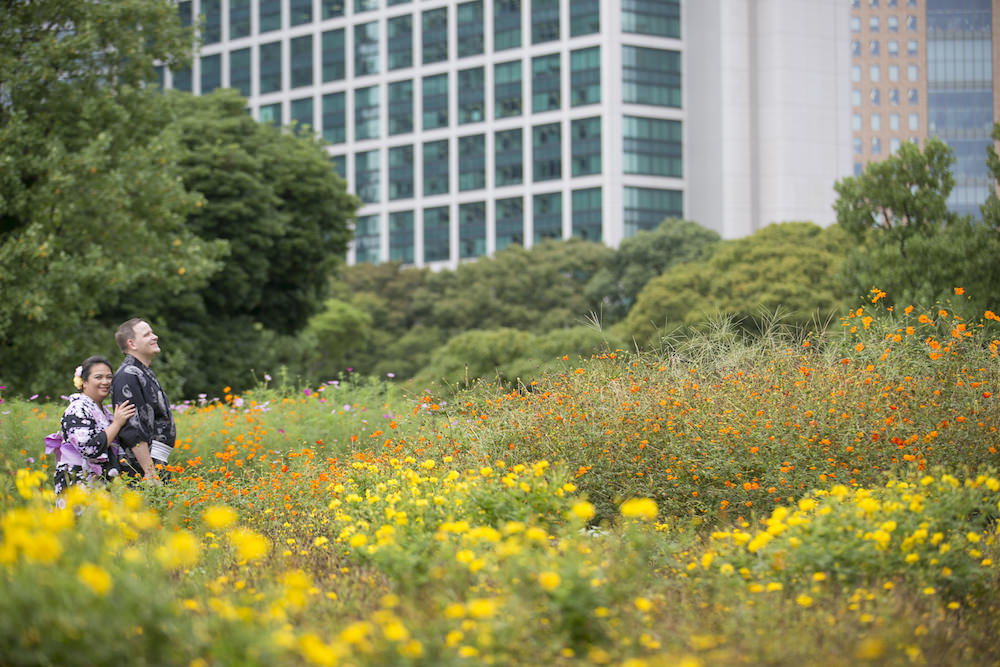 Pre-wedding photo of a couple in Hamarikyu garden in September for cosmos flowers