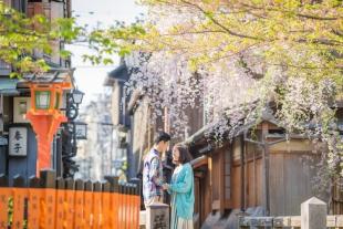 Cherry_Blossom_Gion