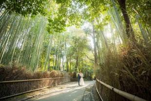 Pre-wedding Kyoto Arashiyama